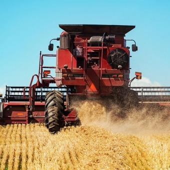Grain Tractor Harvesting Wheat Plants