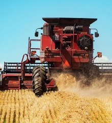 Grain Tractor Harvesting Wheat Plants